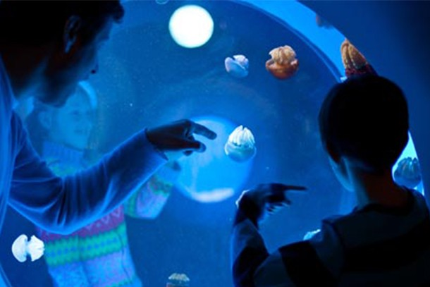 plymouth-aquarium-review-for-families_58798