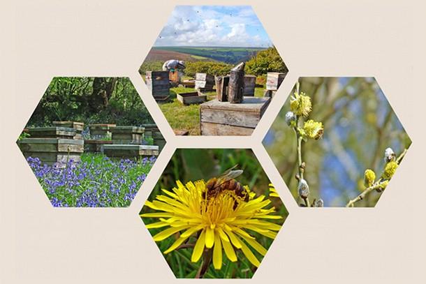 quince-honey-farm-review-for-families_59322