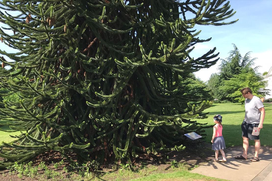 royal-botanic-gardens-kew_d
