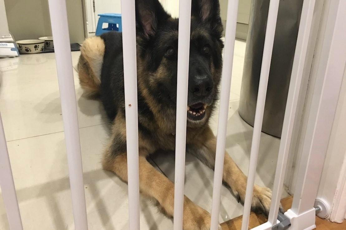 safety-1st-securetech-flat-step-gate_dog