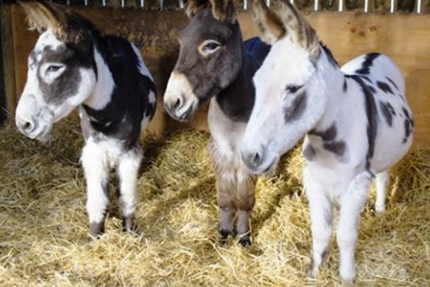 the-donkey-sanctuary-review-for-families_59197