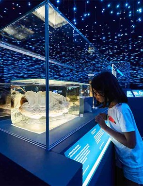 the-natural-history-museum-life-in-the-dark-exhibition_210057