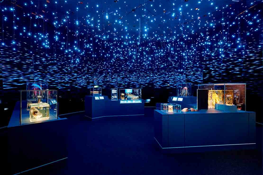 the-natural-history-museum-life-in-the-dark-exhibition_c