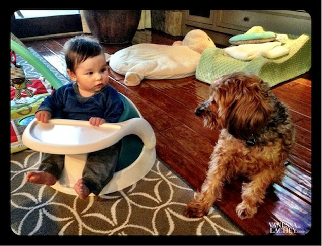 vanessa-and-nick-lacheys-son-camden-caught-in-baby-dog-stare-down_44741