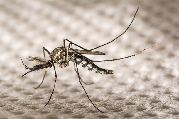 zika-virus-and-pregnancy-what-you-need-to-know_142920