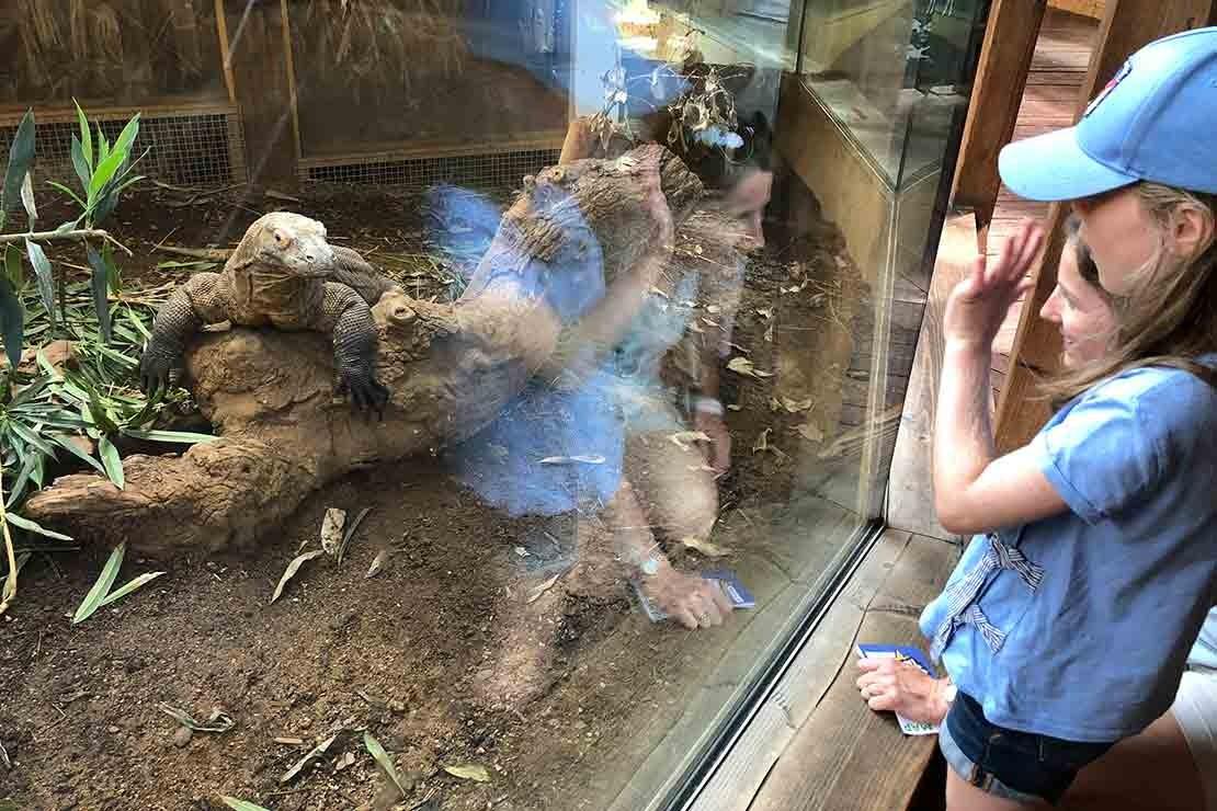 zsl-london-zoo_208242