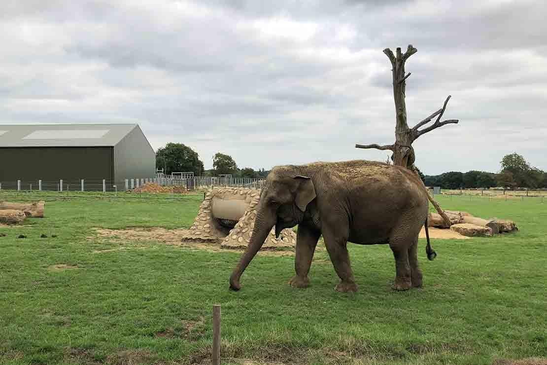 zsl-whipsnade-zoo_208473