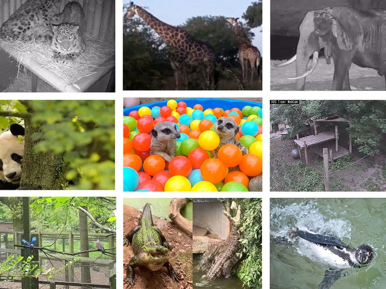 Best zoo webcams and animal livestreams UK - MadeForMums
