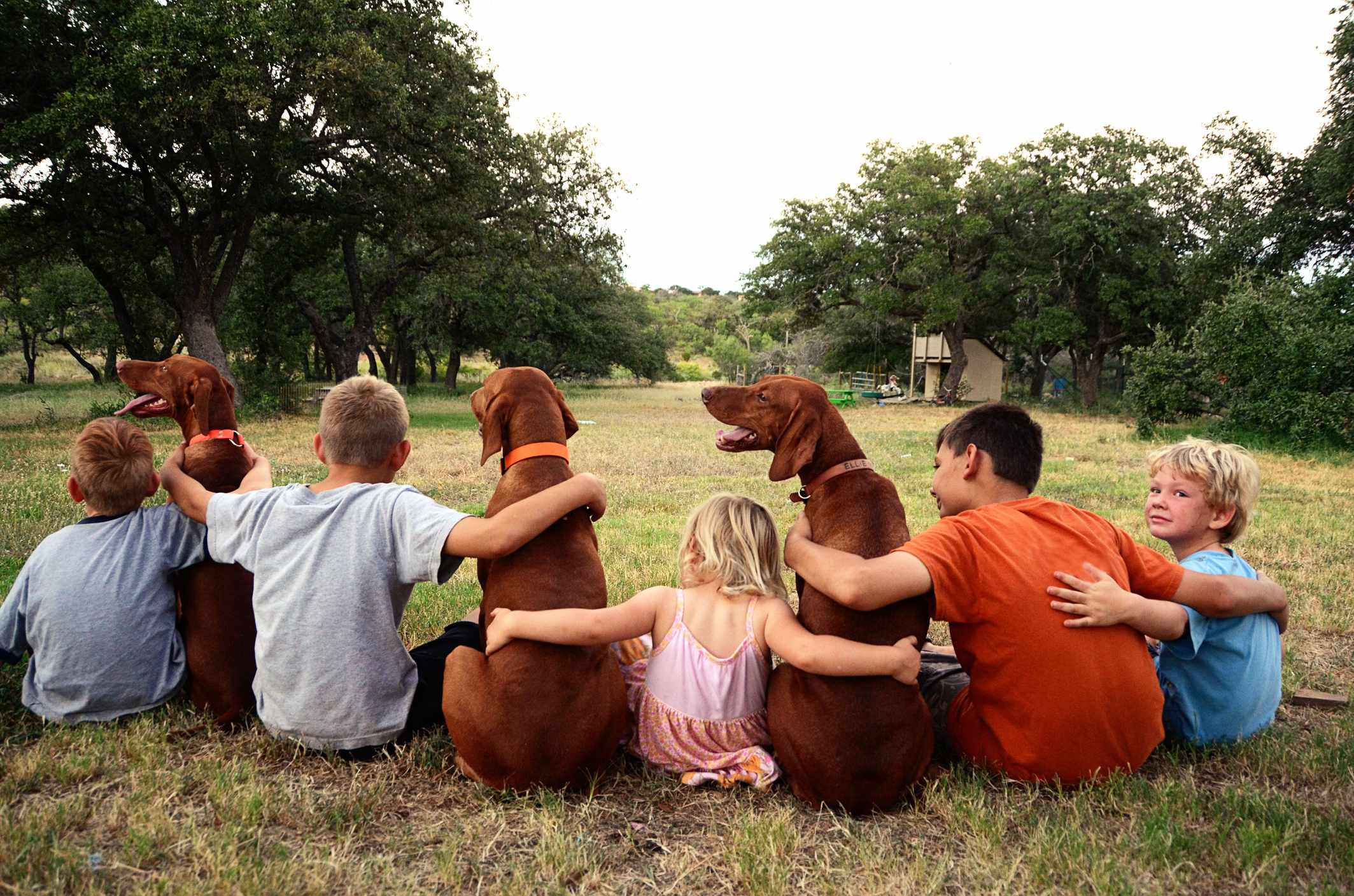 A group of five siblings, brothers and sister, sit in a grassy field with their arms wrapped around the backs of three Vizsla dogs. Four children sit facing away with fifth child's face towards camera. Dogs all wear collars. Green grass field, oak trees and rural country setting.