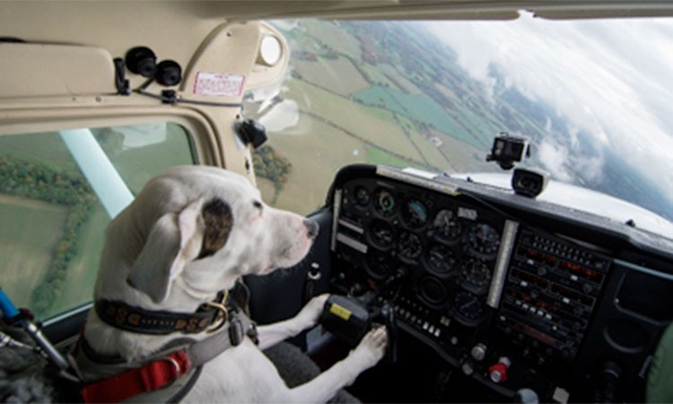 Dogs Might Fly Watch Shadow The Dog Fly A Plane Video Radio Times