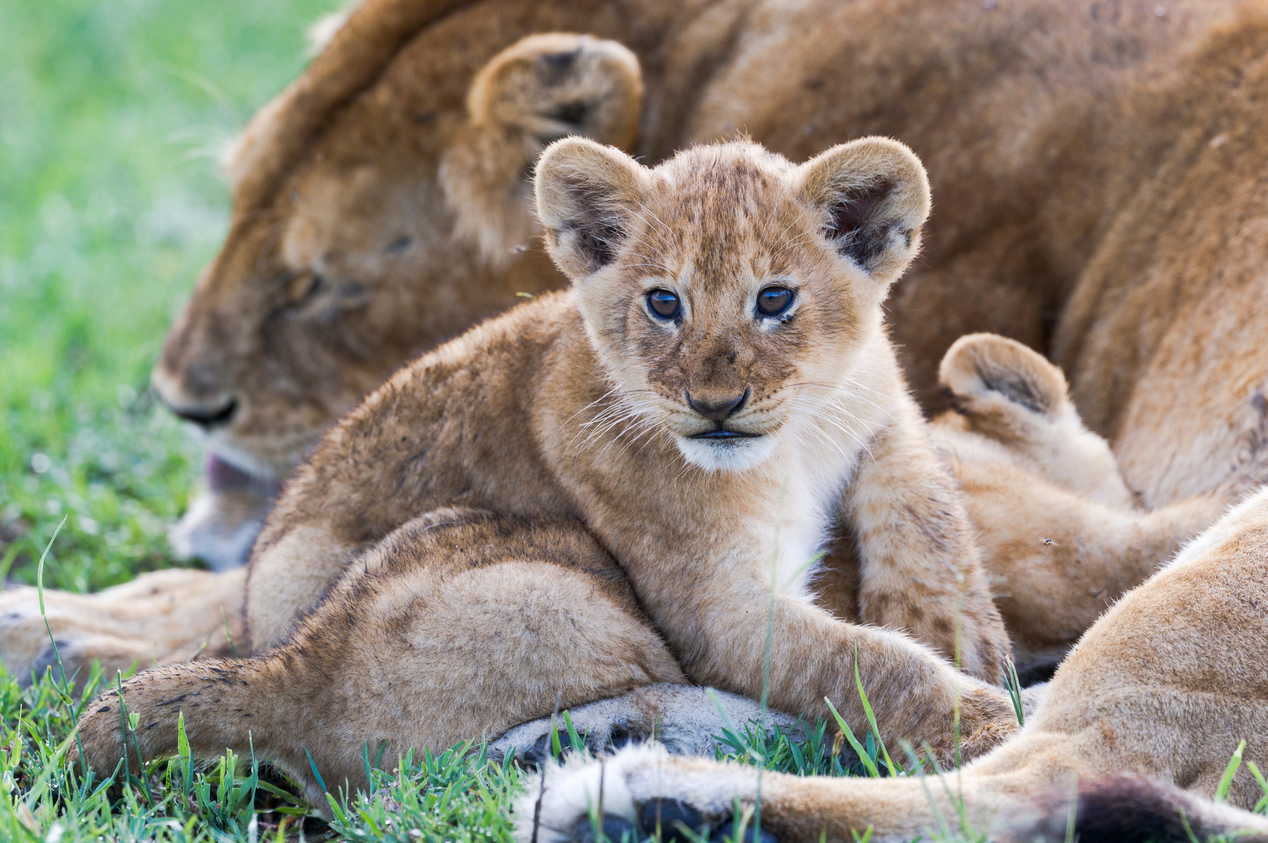 Image of: Cute News Photos Videos And Full Episode Guide Radio Times Serengeti On Bbc1 New Documentary Series To Tell Reallife Stories