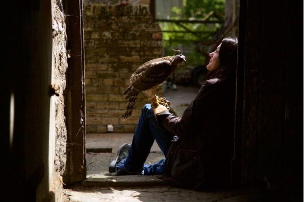 13390089-low_res-h-is-for-hawk-a-new-chapter-natural-world
