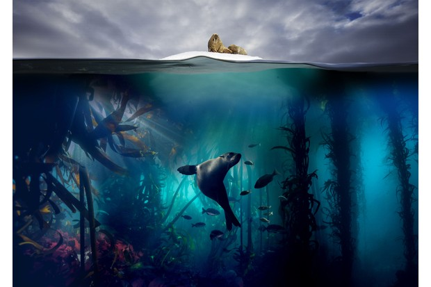 Ocean Floor Under the Sea Background