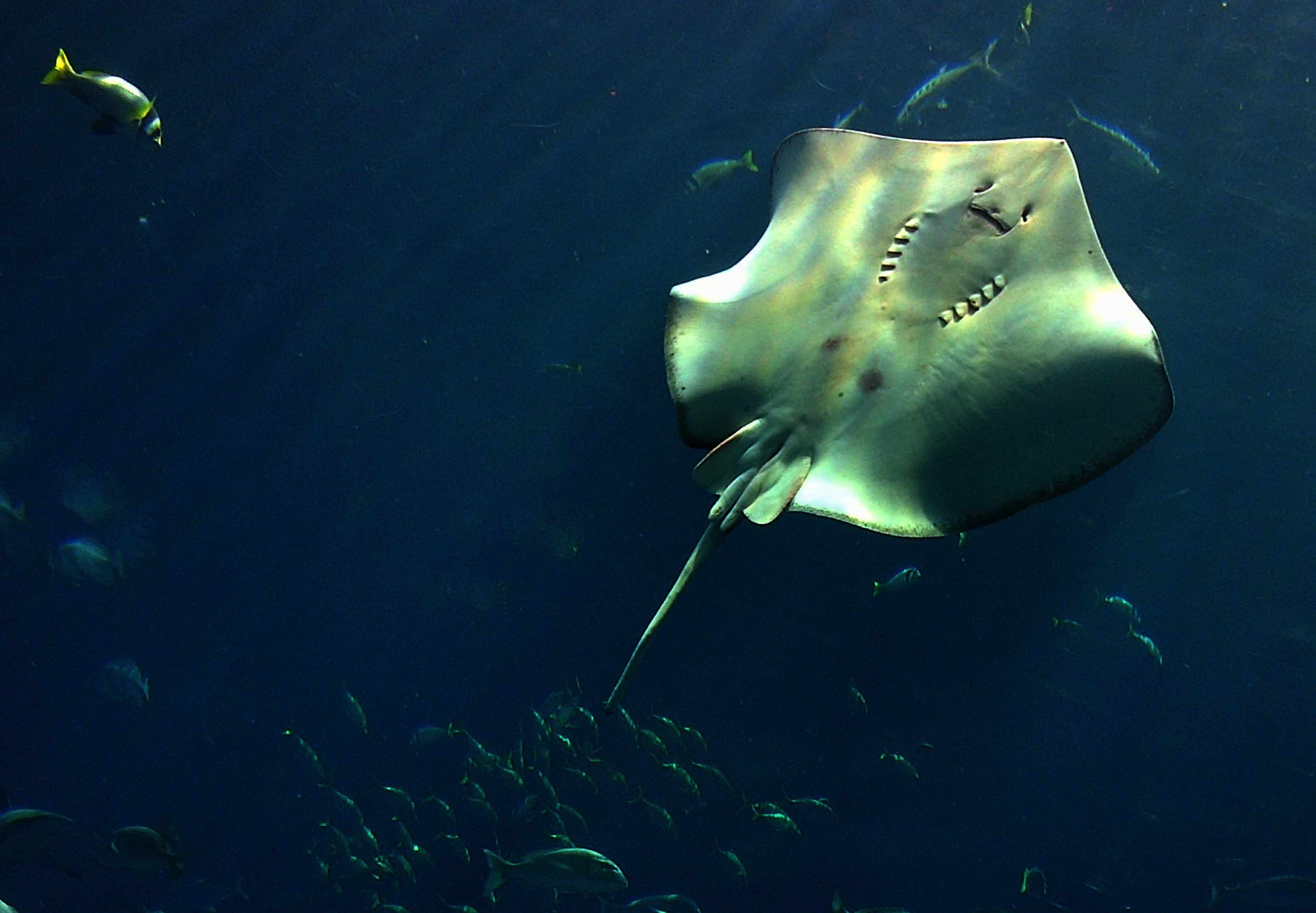 Stingray (Getty, EH)