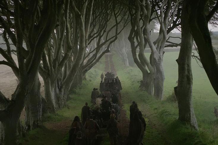 dark-hedges