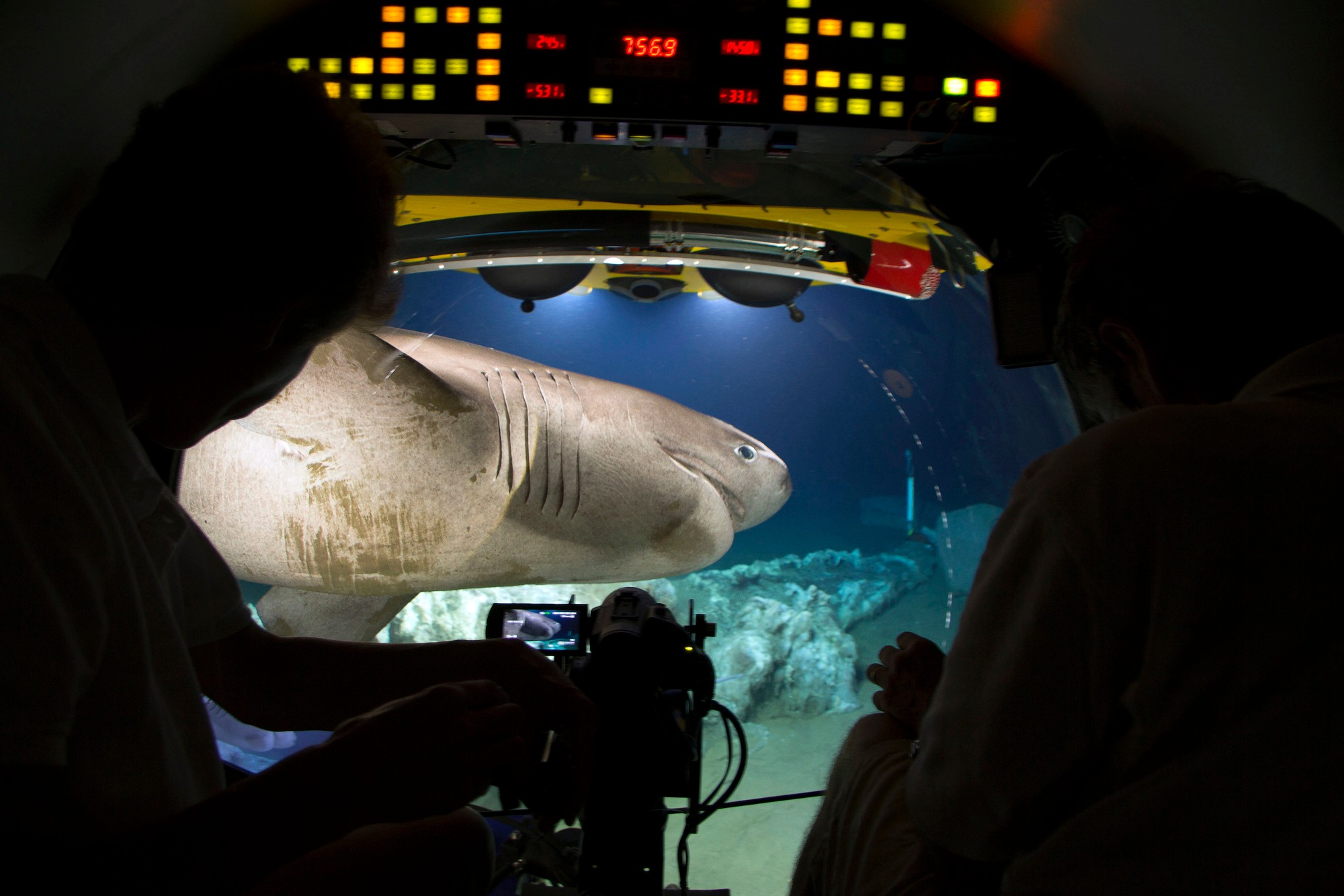 WARNING: Embargoed for publication until 00:00:01 on 30/10/2017 - Programme Name: Blue Planet II - TX: 05/11/2017 - Episode: n/a (No. n/a) - Picture Shows: A bluntnose sixgill shark (Hexanchus griseus) arrives to feed on the carcass of a sperm whale in the Atlantic Ocean. These large sharks have a very slow metabolism, conserving their energy in the desert of the deep sea. Scientists believe they may go for as long as a year without eating. Taken from inside 'Lula', a submersible of the Rebikoff-Niggeler Foundation.  A bluntnose sixgill shark - (C) BBC NHU 2017 - Photographer: Will Ridgeon