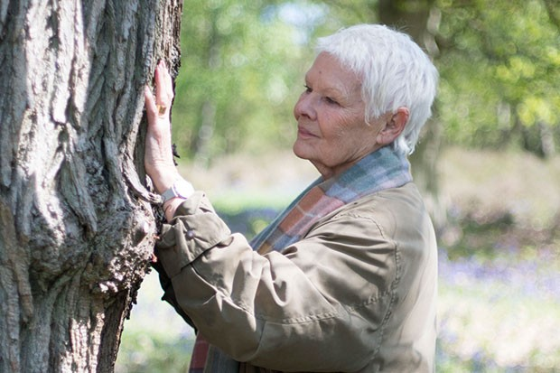 Judi Dench, BBC Pictures, SL