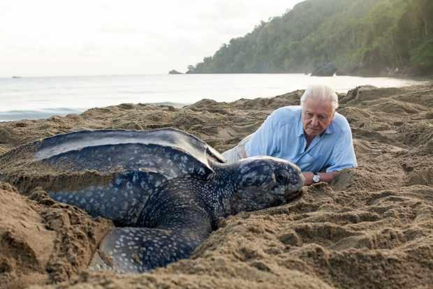 David Attenborough Blue Planet
