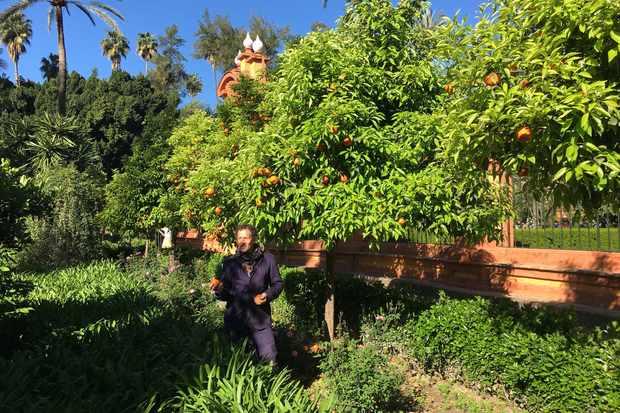 Monty Don in the Spanish orange grove (BBC, TL)
