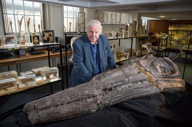 Attenborough and the Sea Dragon (BBC, EH)