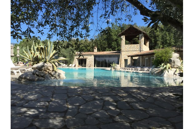 The outdoor pool is surrounded by olive trees