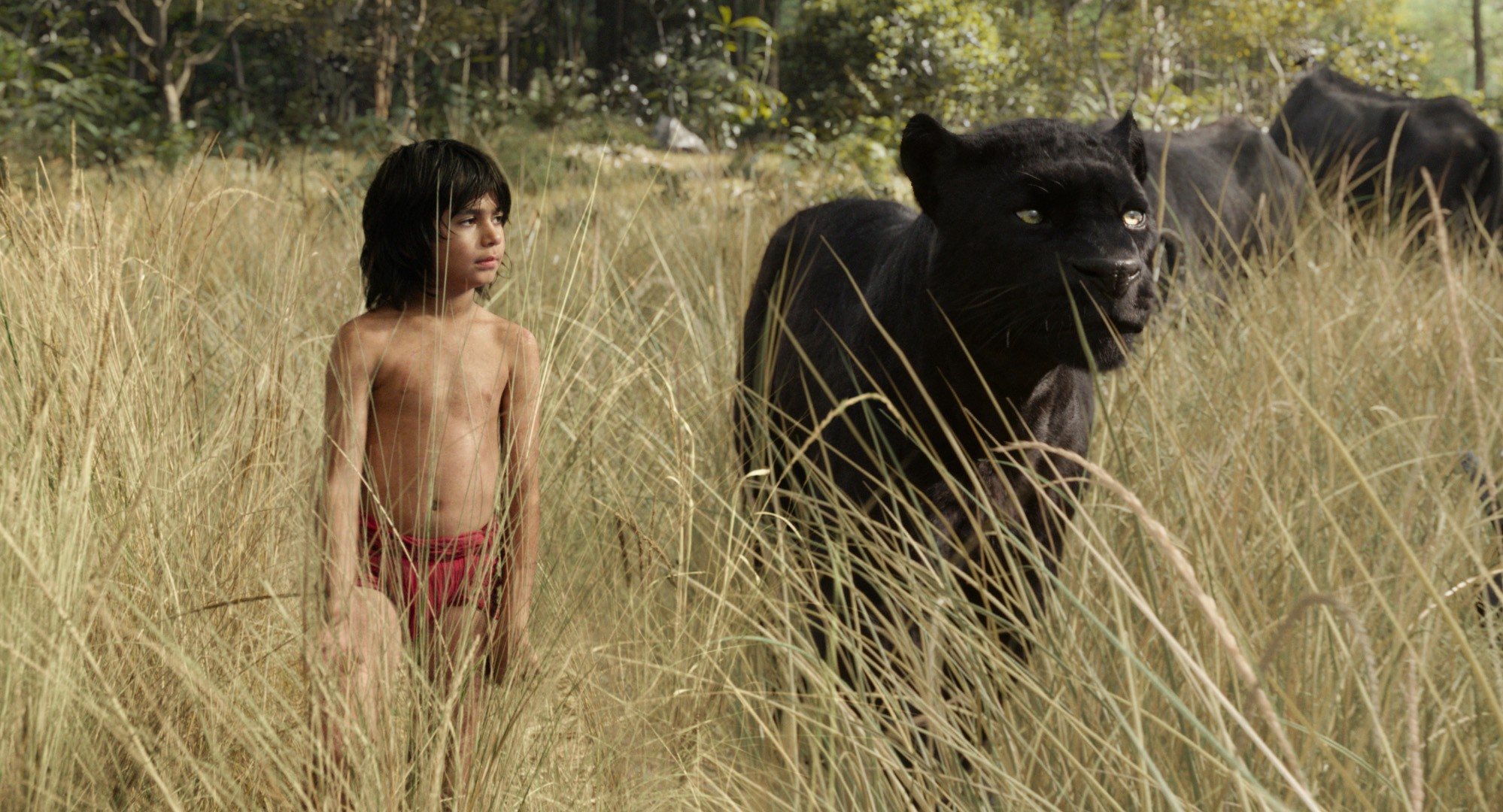 """Mowgli (newcomer Neel Sethi) and Bagheera (voice of Ben Kingsley) embark on a captivating journey in """"The Jungle Book,"""" an all-new live-action epic adventure about Mowgli, a man-cub raised in the jungle by a family of wolves, who is forced to abandon the only home he's ever known. In theaters April 15, 2016.   ©2015 Disney Enterprises, Inc. All Rights Reserved.  Sky, TL"""