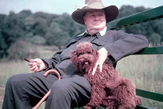 Winston Churchill and pet dog.  (Photo b