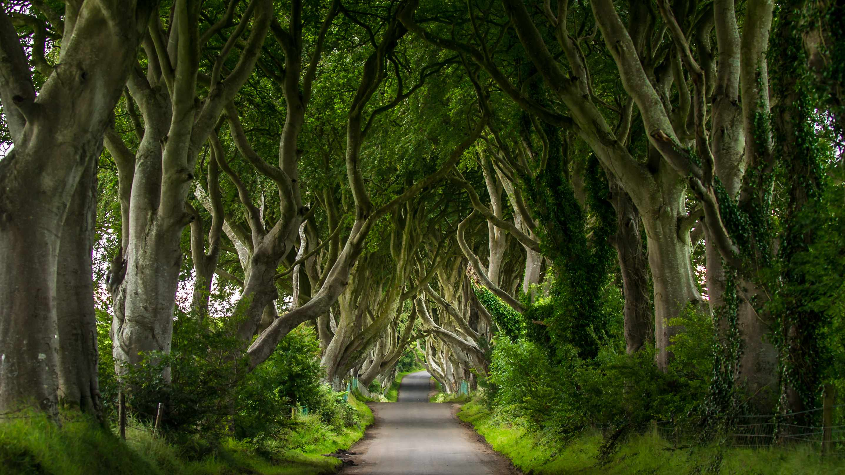 Dark Hedges Northern Ireland, unique looking roadway down a path of curving trees.