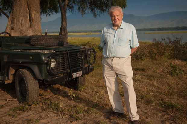Dynasties BBC1: David Attenborough series shows political power games among 5 different animals. Also airing on BBC America, TVNZ 1 - Radio Times