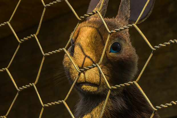 Clover (voiced by Gemma Arterton) in Watership Down
