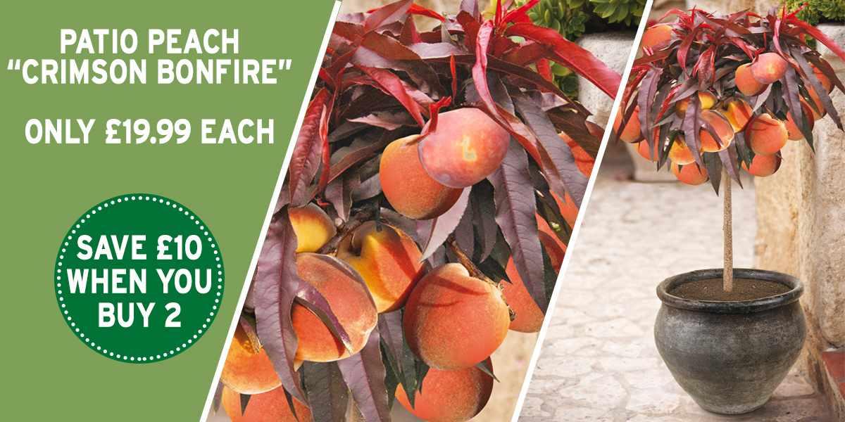 patio peach