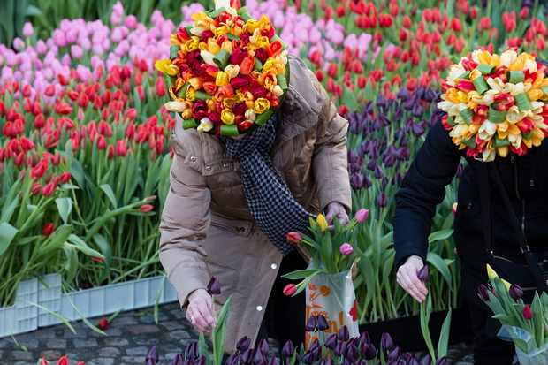 Dutch National Tulip Day (Getty)