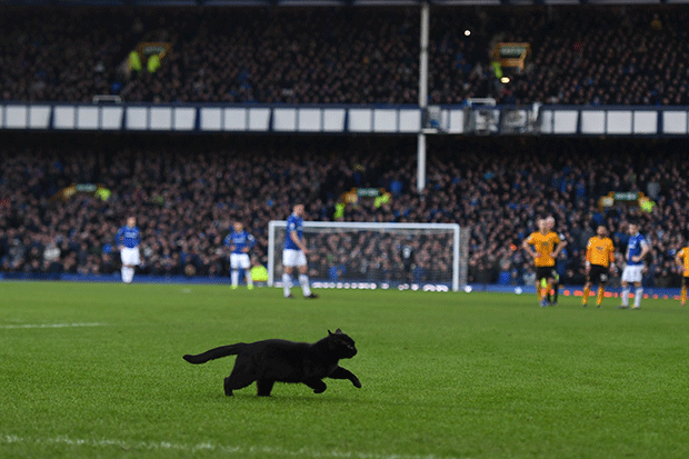 Cat at Everton v Wolves, Getty