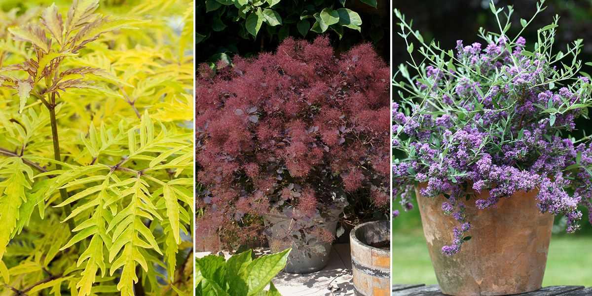 3 shrub collection
