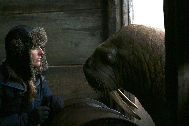 Producer/director Sophie Lanfear comes face-to-face with a Pacific walrus during filming for Our Planet (Netflix)