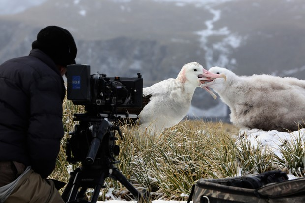 Cameraman Barrie Britton filming a wandering albatross parent, as it returns to feed its chick (Our Planet/Netflix)