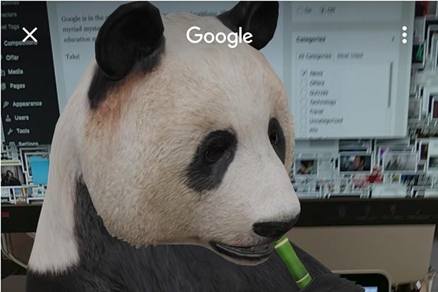 Panda-head
