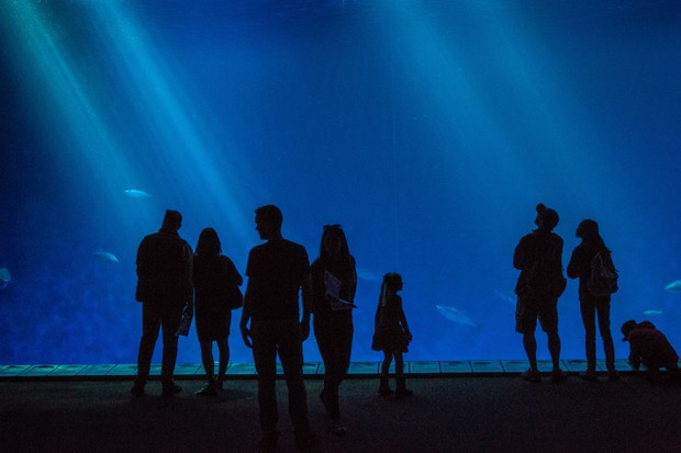 Monterey Bay Aquarium (Getty Images)