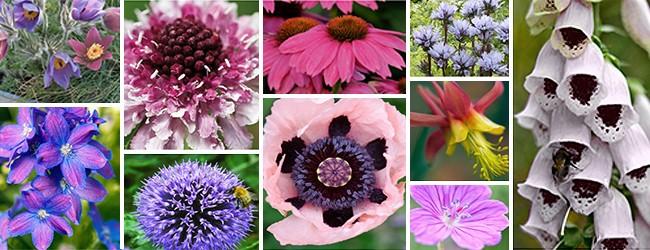 Perennial collection