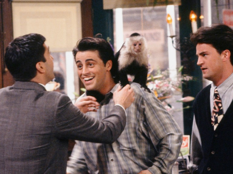 Marcel the monkey from Friends could make a TV comeback
