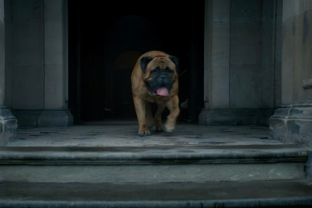 Alfie's dog Cyril in Peaky Blinders