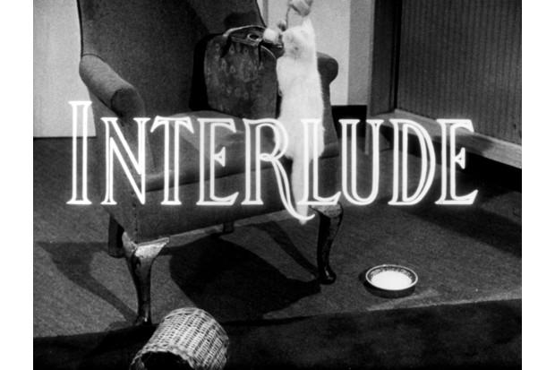 interlude_the_kitten BBC Archive (BBC)