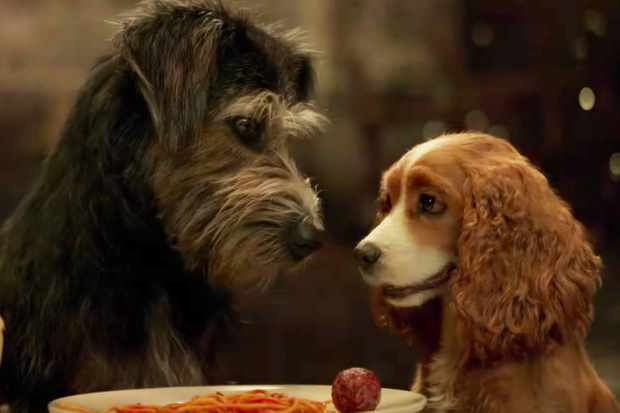Image result for lady and the tramp remake