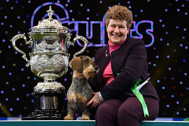 "Winner of Best in Show, the Wire Haired Dachshund, ""Maisie"" is held by owner Kim McCalmont at the trophy presentation for the Best in Show event on the final day of the Crufts dog show at the National Exhibition Centre in Birmingham, central England, on March 8, 2020. - Crufts is one of the largest dog events in the the world, with thousands of dogs competing for the coveted title of 'Best in Show'. Founded in 1891 by the late Charles Cruft, today the four-day show attracts entrants from around the world. (Photo by Ben STANSALL / AFP) (Photo by BEN STANSALL/AFP via Getty Images)"