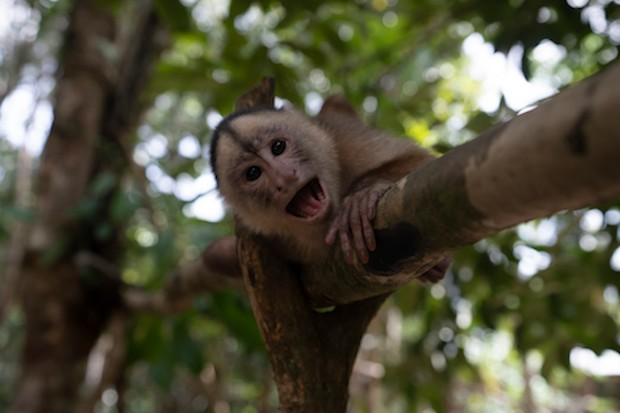 The Maikuchiga Monkey Sanctuary in the the Amazon of Colombia.