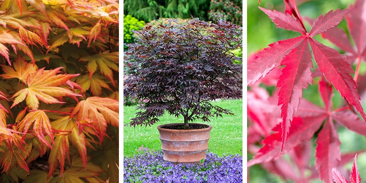 acers gdg home