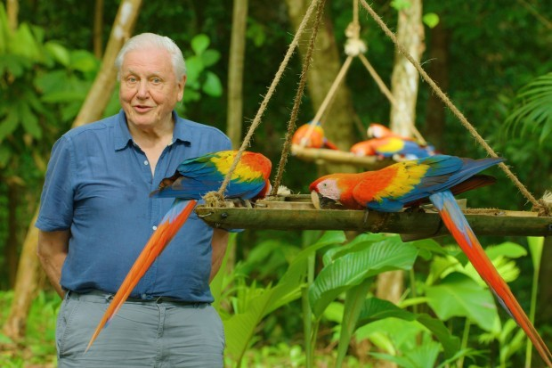David Attenborough's Life in Colour release date: All the details on BBC One's nature documentary - Radio Times