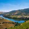 Picture of the Douro Valley with its river in the middle of the vineyards, place with many famous wineries in Portugal.