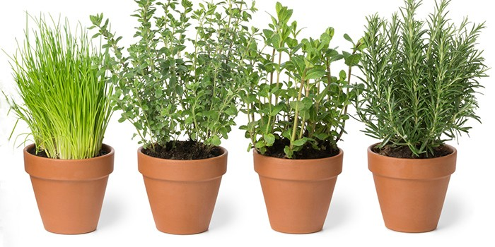 How to make a herb garden - BBC Good Food
