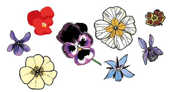 Illustrated edible flower heads, including pansies and primroses